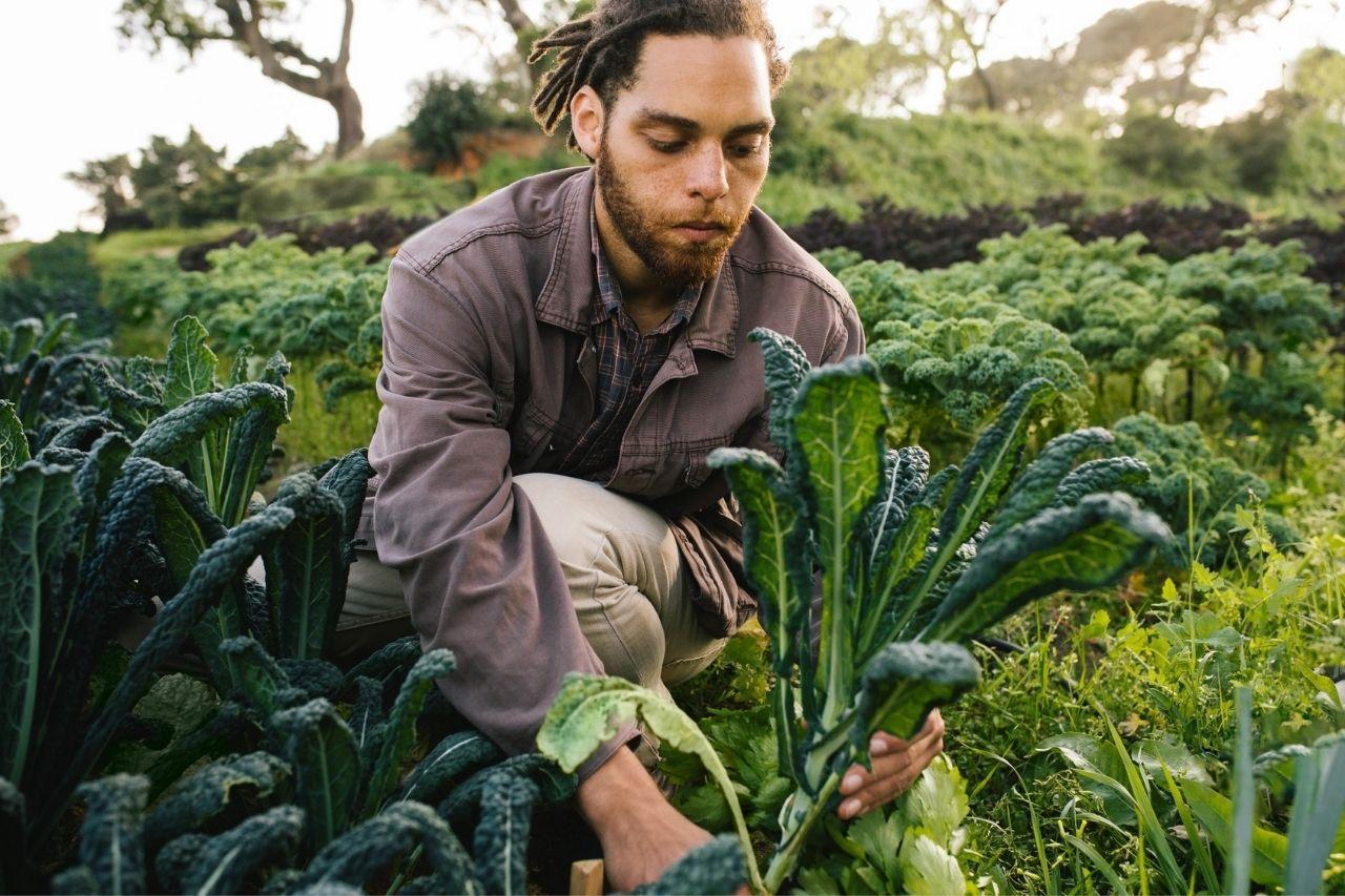 Travailler dans l'agriculture